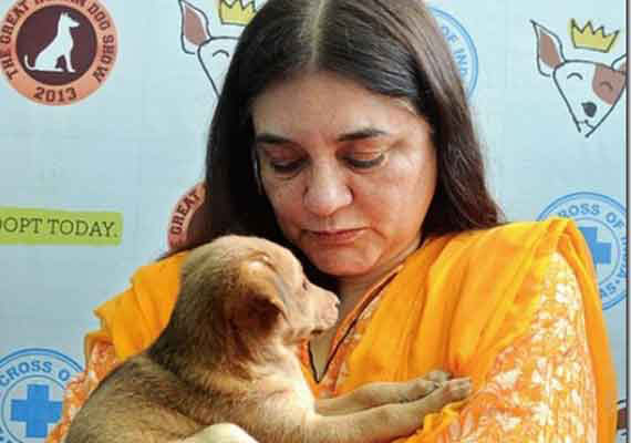 Union Minister for Women & Child Development, Maneka Gandhi Picture By: India TV News