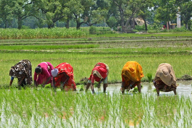Women Farmers In India Where They Stand Shethepeople Tv