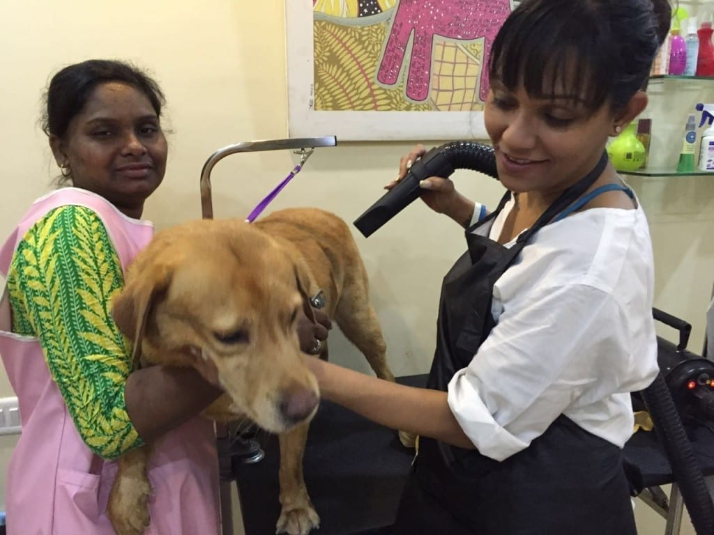Shona Bhobe, Twix & Butch Pet Salon