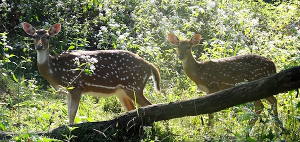 Silent Valley National Park, one of Krishnadas' favourtie sites. Picture Credit: indianholiday.com