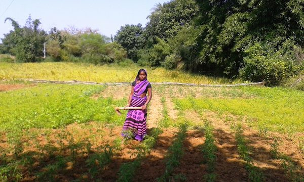 Women Farmers in Jharkhand. Picture credit: thebetterindia.com