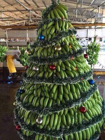 Bananas for a Christmas tree!