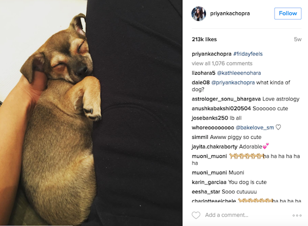 Priyanka Chopra with her new pup Diana