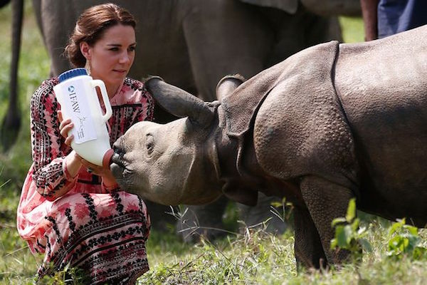 The-Duchess-of-Cambridge-feeds-a-baby-rhino-at-the-Centre-for-Wildlife-Rehabilitation-and-Conservation