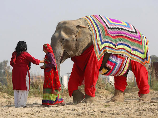 Elephants wear woollen jumpers