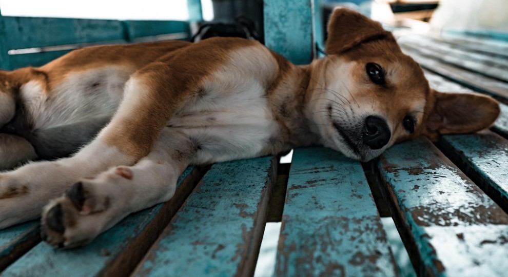 A puppy lying on a bench. Photo by jesse schoff