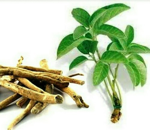 Ashwagandha benefits and uses, home remedies, dadi ke nuske, ashwagandha