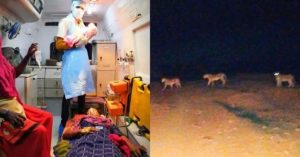 Woman Delivers Baby While Lions Guard
