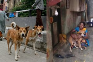 Chennai woman 13 dogs