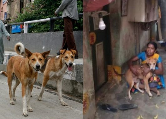 this-chennai-woman-eats-once-a-day-to-feed-her-13-dogs