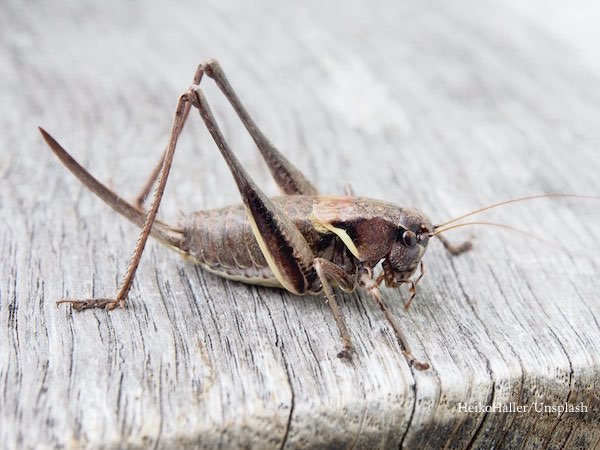 the locust swarms india, in india by heiko-haller
