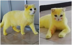 Thai woman accidentally dyes Cat