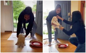 Puppy welcomed with tradition, Tiktok video, reactions on puppy video